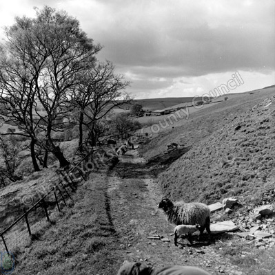 Swaledale near Keld
